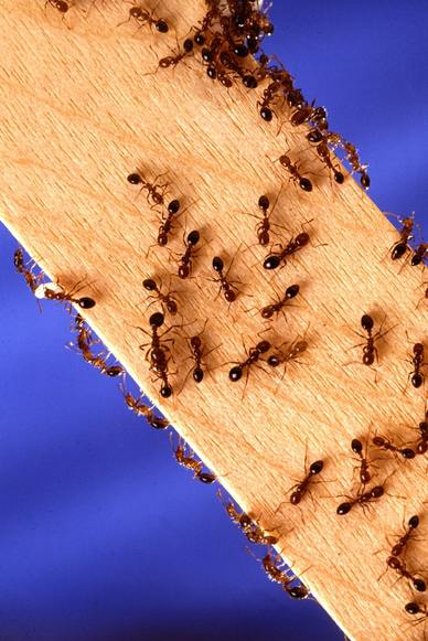 Destroy ant trails and insect nests